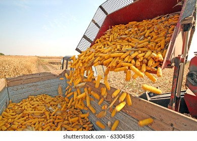Tractor with agricultural machinery is harvesting corn at field