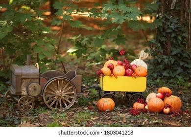 tractor with a cart with pumpkins, viburnum, rowan, apples. Harvesting autumn harvest