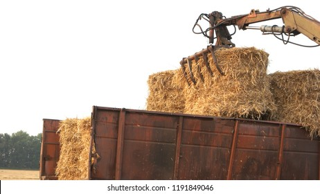 Tractor collecting straw bales close up. Tracktor trail with round straw bales.