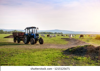 Tractor and cows on the farm. Industrial theme