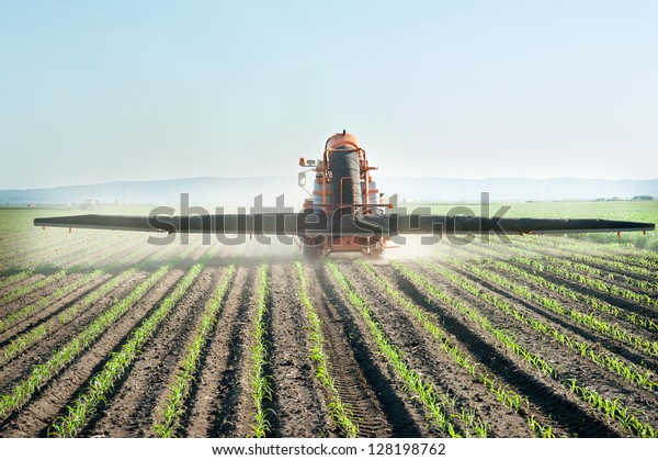Tractor fertilizes crops corn in spring