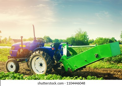 tractor in the field with a plow for digging potatoes harvesting, seasonal work, fresh vegetables, agro-culture, farming, close-up, good harvest on a sunny day. selective focus