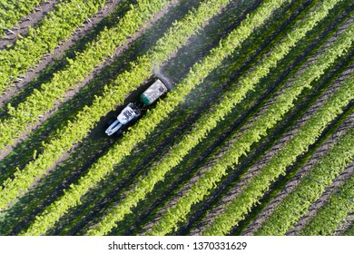 Tractor in a fields, apple orchards in Valtellina