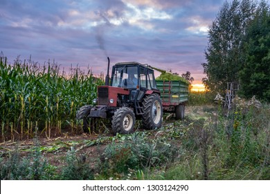 Tractor Harvesting Organic Corn Field for Biomass on Cloudy Summer Evening with Sunset Colors and Dramatic Sky - Concept of Nutrition full Vegetables and Renewable Energy for Gas and Fuel