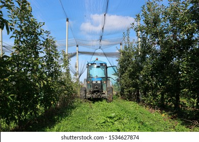 Tractor inside an apple orchard protected by an anti insect net coverings