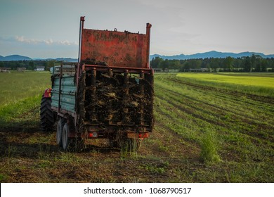 Tractor with manure spreader on a field in the summer sun, dispersing manure to provide fertilization of the land.