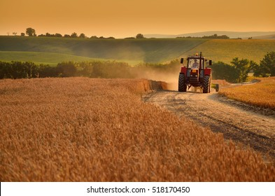 Tractor on agricultural field during sunset - road between rye fields, Land full of summer evening light