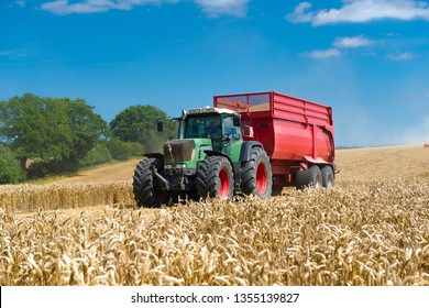 Tractor with red loader wagon in the grain field
