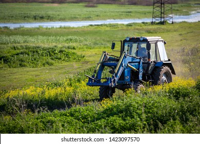 Tractor rides on the field. Summer sunny day. Blooming colza. Russian province. A small reservoir.