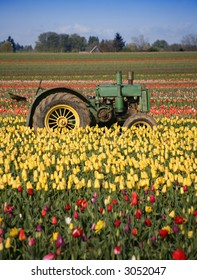 Tractor Sitting in Rows of Tulips Growing in Field Rural Oregon Community