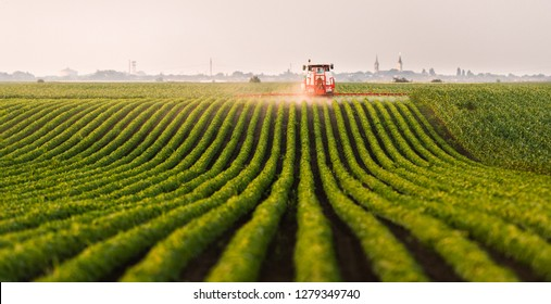Tractor spraying a field of soybean