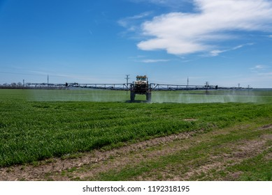 Tractor spraying pesticide in a field of wheat.
