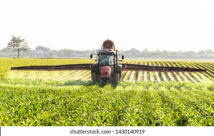 Tractor spraying pesticides on corn field  with sprayer at spring