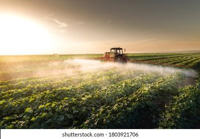 Traktorspritzen von Pestiziden auf dem Gemüsefeld mit Sprühwasser im Frühjahr