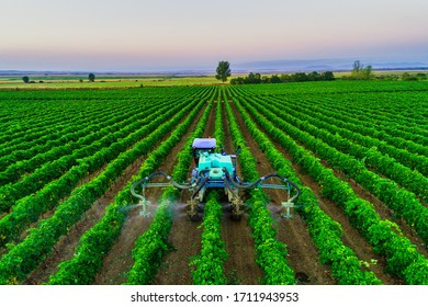 Tractor spraying vines over vineyard in Europe.
