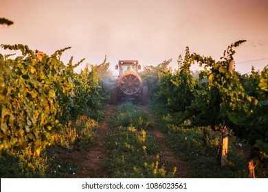 Tractor spraying vineyard with fungicide