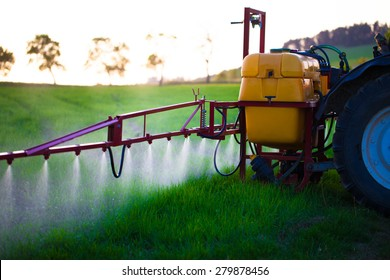 Tractor spraying wheat field with sprayer during sunset