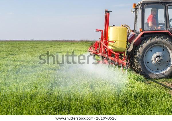 Tractor spraying wheat field with sprayer
