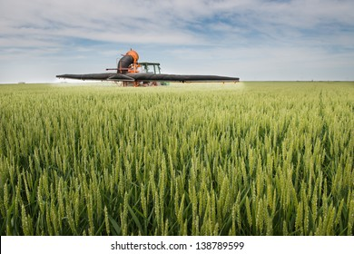Tractor spraying wheat in the spring
