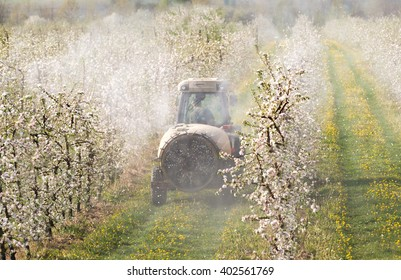 Tractor sprays insecticide in apple orchard