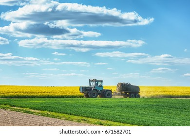 A tractor with a tank rides in the middle of the meadows and rapeseed at sunny day.