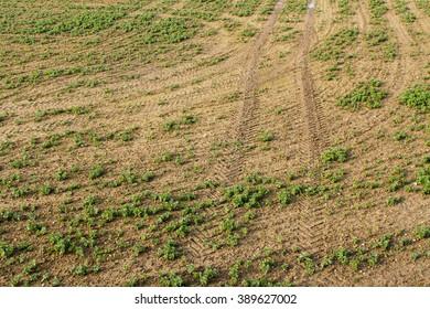 Tractor tire tracks in muddy field