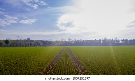 Tractor tracks on a field with winter crops in the back light of the sun.