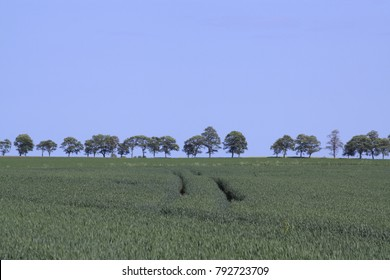 Tractor trail in a shelved cornfield against a bright blue sky