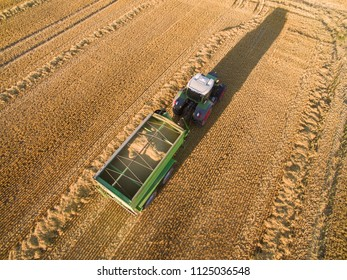 tractor with trailer harvesting golden ripe wheat field in the summer - Agriculture. From above.