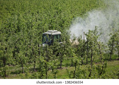 Tractor using a air dust machine sprayer with a chemical insecticide or fungicide in apple orchard, agriculture in spring