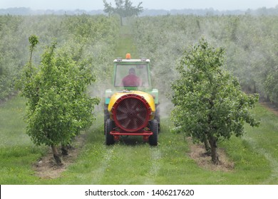 Tractor using a air dust machine sprayer with a chemical insecticide or fungicide in a peach orchard, agriculture in spring