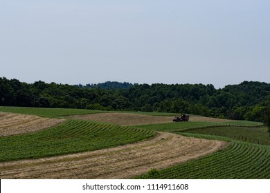 Tractor and wagon in the distance putting up haylage on rolling hill fields in Appalachia. Blank sky for copy.