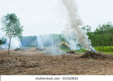 A tractor working in a rubber plantation