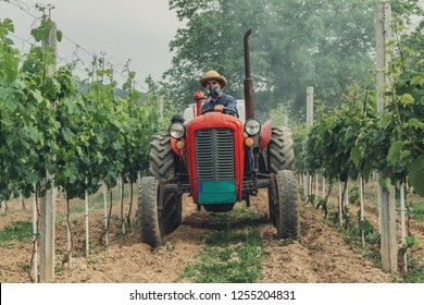 Tractor working in vineyard. Agriculture concept. Viticulture concept. Making vine