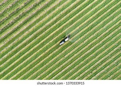 Tractor works in a fields, agriculture in Valtellina, apple orchards