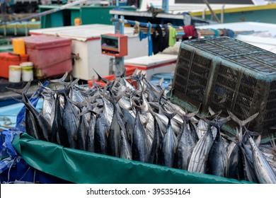 Traders cart full of freshly caught Tuna fish at Fish market in Male, Maldives
