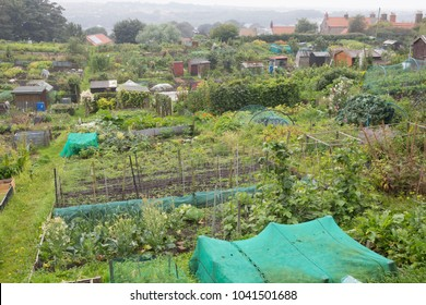 Traditional allotment gardens.