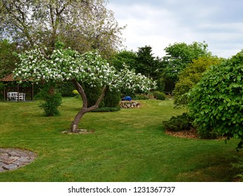 Traditional beautiful landscaped lush green blooming English style garden in summer