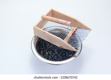 Traditional blueberry picking comb made of wood on a stainless steel bowl with freshly harvested blueberries against a white background