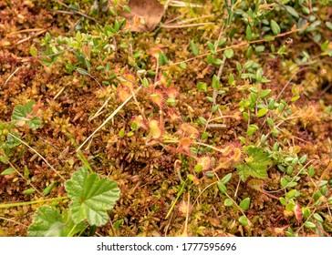 traditional bog vegetation background, bog grass, plants, water, moss, summer in the bog