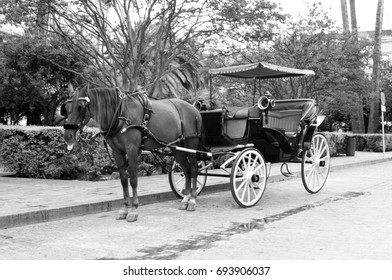 traditional carriage