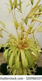 "Traditional coconut leaves decoration. ""Gokkola Arts"""