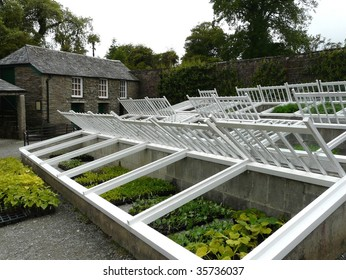 Traditional cold frames for wintering plants