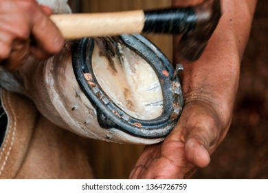 Traditional craftsmen - a farrier or blacksmith hammering the nail when shoeing the horse hoof at ranch. selective focus on hoof and blurred motion of hand movement due to slow shutterspeed.