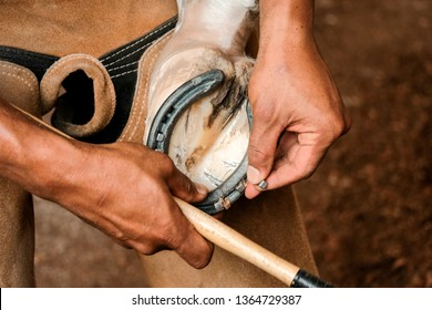 Traditional craftsmen - a farrier or blacksmith hammering the nail when shoeing the horse hoof at ranch. selective focus on hoof.