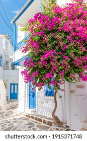 Traditional Cycladitic alley with a narrow street, whitewashed houses and a blooming bougainvillea in Parikia, Paros island, Greece.