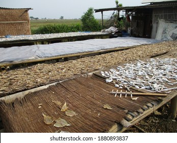The traditional drying process of salted fish only relies on the hot sun