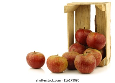 """Traditional Dutch apples called """"goudrenet"""" used for making apple pie in a wooden crate on a white background"""