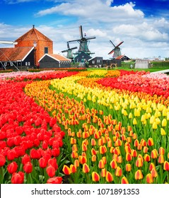 traditional Dutch rural scene with windmills and field of tulips of Zaanse Schans, Netherlands