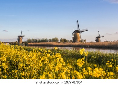 Traditional Dutch windmills framed by yellow flowers in spring Kinderdijk Molenwaard South Holland The Netherlands Europe